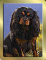 Black & Tan Cavalier King Charles Spaniel Mädchen (Lilly) Darling The Lovley Indy's